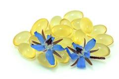 πετρέλαιο starflower Στοκ Εικόνες