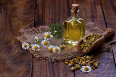 Πετρέλαιο Chamomile aromatherapy Στοκ Φωτογραφία