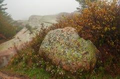 Πετρώδης έκταση με τα λουλούδια μεταξύ των πετρών Βροχερή ομιχλώδης νεφελώδης ημέρα φθινοπώρου Εθνικό πάρκο Acadia το φθινόπωρο Η στοκ φωτογραφία με δικαίωμα ελεύθερης χρήσης
