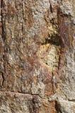 πετρώνω δάσος Στοκ Φωτογραφίες