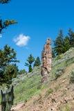 Πετρώνω δέντρο στο εθνικό πάρκο Yellowstone στοκ φωτογραφία