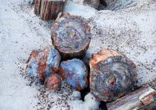 πετρώνω δέντρο Στοκ φωτογραφίες με δικαίωμα ελεύθερης χρήσης