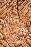 Πετρώνω? ξύλινη λεπτομέρεια Στοκ φωτογραφία με δικαίωμα ελεύθερης χρήσης