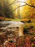 Πετρώδεις όχθεις του ποταμού βουνών φθινοπώρου που καλύπτεται από τα πορτοκαλιά φύλλα οξιών Φρέσκα πράσινα φύλλα στους κλάδους αν Στοκ Φωτογραφίες