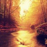 Πετρώδεις όχθεις του ποταμού βουνών φθινοπώρου που καλύπτεται από τα πορτοκαλιά φύλλα οξιών Φρέσκα πράσινα φύλλα στους κλάδους αν Στοκ Εικόνα