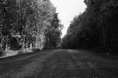 Πετρώδης δασικός δρόμος μεταξύ των δέντρων Στοκ φωτογραφία με δικαίωμα ελεύθερης χρήσης
