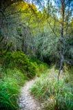Πετρώδης κάμπτοντας πορεία σε μια επαρχία μεταξύ των πράσινων δέντρων και της χλόης Στοκ Εικόνες