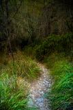 Πετρώδης κάμπτοντας πορεία σε μια επαρχία μεταξύ των πράσινων δέντρων και της χλόης Στοκ Φωτογραφίες