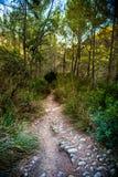 Πετρώδης κάμπτοντας πορεία σε μια επαρχία μεταξύ των πράσινων δέντρων και της χλόης Στοκ φωτογραφίες με δικαίωμα ελεύθερης χρήσης