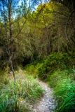 Πετρώδης κάμπτοντας πορεία σε μια επαρχία μεταξύ των πράσινων δέντρων και της χλόης Στοκ Φωτογραφία