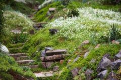 Πετρώδη σκαλοπάτια στον πράσινο κήπο Στοκ Εικόνα
