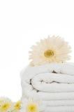 πετσέτα μαργαριτών Στοκ Φωτογραφίες