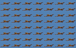 ΠΕΤΩΝΤΑΣ ΤΑΠΕΤΣΑΡΙΑ ΤΟΥ ΧΑΡΒΑΡΝΤ Στοκ εικόνα με δικαίωμα ελεύθερης χρήσης