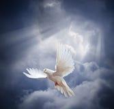 Πετώντας άσπρο περιστέρι στο υπόβαθρο μπλε ουρανού στοκ εικόνες