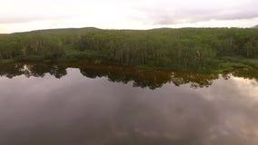 πετώντας λίμνη Μύγες Copter προς τα εμπρός και μύγες στα δέντρα φιλμ μικρού μήκους