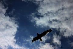 Πετώντας αετός Στοκ φωτογραφία με δικαίωμα ελεύθερης χρήσης