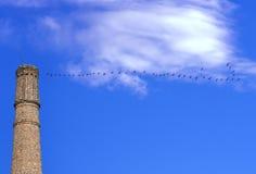 Πετώντας γερανοί στο μπλε ουρανό και τη βιομηχανική καπνοδόχο Στοκ Φωτογραφία