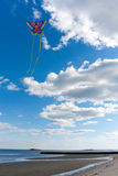 πετώντας ικτίνος παραλιών Στοκ Εικόνες