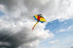Πετώντας ικτίνος στον αέρα Στοκ εικόνες με δικαίωμα ελεύθερης χρήσης