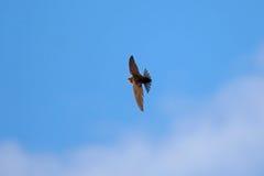 πετώντας κεφάλι πέρα από τον Στοκ φωτογραφία με δικαίωμα ελεύθερης χρήσης