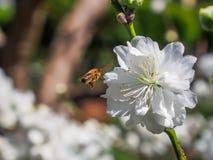 πετώντας κορίτσι κοστουμιών μελισσών μικρό Στοκ φωτογραφία με δικαίωμα ελεύθερης χρήσης