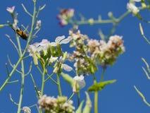 πετώντας κορίτσι κοστουμιών μελισσών μικρό Στοκ Εικόνα