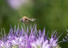 πετώντας κορίτσι κοστουμιών μελισσών μικρό Στοκ Εικόνες