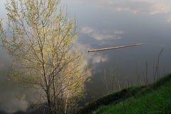 πετώντας κούτσουρο Στοκ φωτογραφίες με δικαίωμα ελεύθερης χρήσης