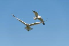 πετώντας λίμνη πέρα από seagulls στοκ φωτογραφία με δικαίωμα ελεύθερης χρήσης