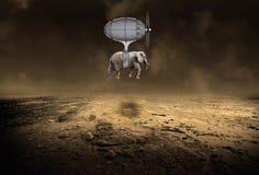 Πετώντας μηχανή ελεφάντων Στοκ Εικόνα