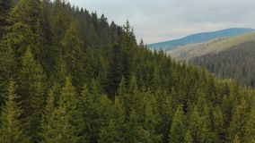 Πετώντας πέρα από τις κορυφές των δέντρων, κωνοφόρα πράσινα έλατα, ενάντια στο σκηνικό ενός γραφικού τοπίου των ορεινών περιοχών απόθεμα βίντεο