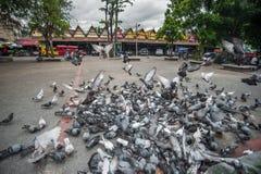 Πετώντας περιστέρια σε Chiangmai Ταϊλάνδη Στοκ Εικόνες