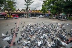 Πετώντας περιστέρια σε Chiangmai Ταϊλάνδη Στοκ εικόνες με δικαίωμα ελεύθερης χρήσης