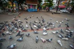 Πετώντας περιστέρια σε Chiangmai Ταϊλάνδη Στοκ φωτογραφίες με δικαίωμα ελεύθερης χρήσης