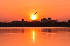 Πετώντας πουλί στο ηλιοβασίλεμα πέρα από την πόλης σκιαγραφία Στοκ εικόνα με δικαίωμα ελεύθερης χρήσης