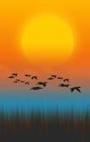 Πετώντας πουλί Στοκ εικόνα με δικαίωμα ελεύθερης χρήσης