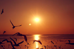 Πετώντας πουλιά σκιαγραφιών Στοκ φωτογραφίες με δικαίωμα ελεύθερης χρήσης