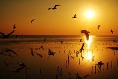 Πετώντας πουλιά σκιαγραφιών Στοκ Εικόνα