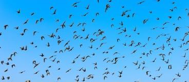 Πετώντας πουλιά Στοκ Εικόνα