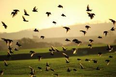 Πετώντας πουλιά Στοκ εικόνα με δικαίωμα ελεύθερης χρήσης