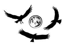 Πετώντας σκιαγραφίες αετών, διανυσματική απεικόνιση Στοκ Φωτογραφίες