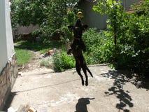 Πετώντας σκυλί Στοκ εικόνες με δικαίωμα ελεύθερης χρήσης