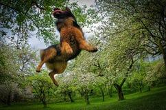 Πετώντας σκυλί στοκ εικόνες