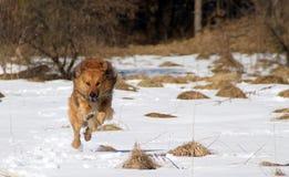 Πετώντας σκυλί Στοκ εικόνα με δικαίωμα ελεύθερης χρήσης