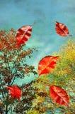 πετώντας φύλλα φθινοπώρο&upsil Στοκ φωτογραφίες με δικαίωμα ελεύθερης χρήσης