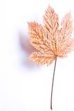 πετώντας φύλλο στοκ φωτογραφία