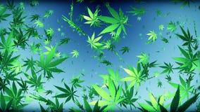 Πετώντας φύλλα καννάβεων σε σκούρο μπλε ελεύθερη απεικόνιση δικαιώματος