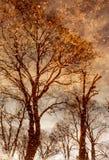 Πετώντας φύλλα Στοκ εικόνες με δικαίωμα ελεύθερης χρήσης