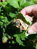 Πετώντας χελώνα στοκ εικόνες