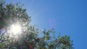 Πετώντας χνούδι λευκών φιλμ μικρού μήκους